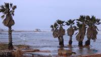 Afectacions del temporal a la platja de la bassa de l'arena del delta de l'Ebre