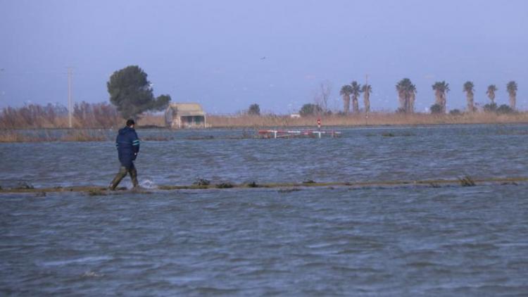 Un arrossaire, ahir al delta de l'Ebre, on l'aigua de mar ha negat els camps d'aigua salada