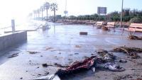 Restes d'una tonyina a la platja de l'Ampolla dijous després de la tempesta