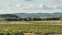 La zona afectada pel nou polígon logístic de Sant Marçal-Cal Vies, al Penedès, és actualment un gran mar de vinyes
