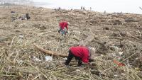 Voluntaris recollint brossa del temporal Glòria a la platja d'Arenys de Mar