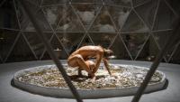 Un detall de la instal·lació i coreografia '<i>Mass-bloom explorations', de Recoil Performance Group</i>