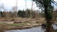 Aspecte actual de la Tordera, encara amb arbres caiguts i restes vegetals