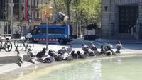 Coloms refrescant-se en una font de la plaça de Catalunya de Barcelona, ahir al matí