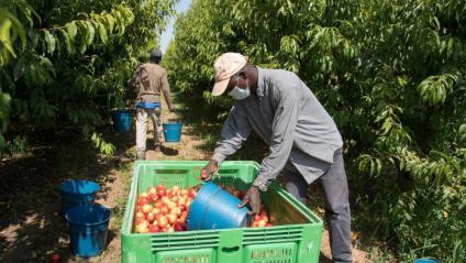 Els més de 3.000 treballadors del sector de la fruita se sotmetran a un cribratge amb PCR, segons Salut