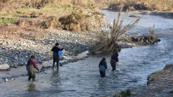 Tasques per analitzar les comunitats de peixos del Besòs afectades al desembre