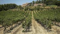 Un camp de vinyes, a la zona del Penedès, ahir al matí