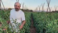 Salomó Torres, enmig de tomaqueres, a la seva explotació de producció ecològica a Blancafort (Conca de Barberà)