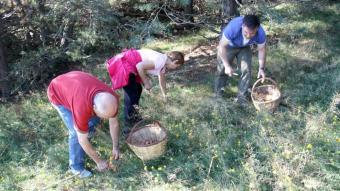 Boletaires buscant rovellons en un bosc al terme de Montferrer i Castellbò, a l'Alt Urgell, en una imatge d'arxiu