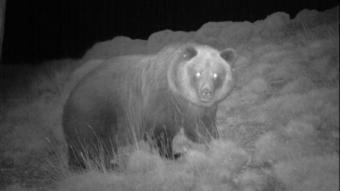 Un caçador mata l'ossa Sarousse a la Vall de Bardaixí de la Ribagorça aragonesa