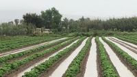 Camps de conreu al delta del Llobregat