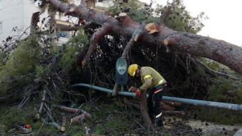 Els Bombers retirant un arbre de grans dimensions caigut pel vent a Cunit