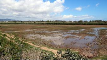 Un dels prats del Delta del Llobregat