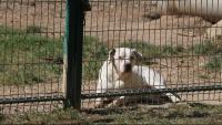 Un gos davant una tanca amb cadenat en un dels habitatges de Tossa on s'ha detectat aquest problema