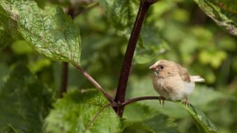 Un ocell en un entorn natural