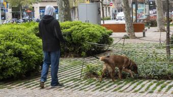 Una persona passeja el seu gos a Barcelona