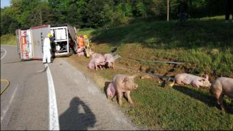 Bolca un camió carregat amb 160 porcs a la C-63 a la Vall d'en Bas
