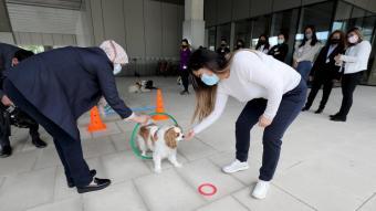 L'Anisa i la Patricia dirigeixen un dels gossos de l'entitat Vincles, en un circuit on han d'aconseguir que els faci cas, a Barcelona