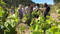 Una activitat d'enoturisme en unes vinyes de la DO Tarragona
