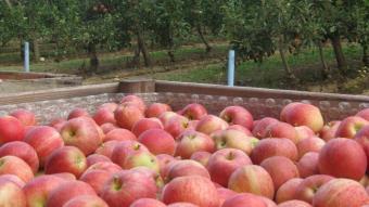 Collita de poma a Girona