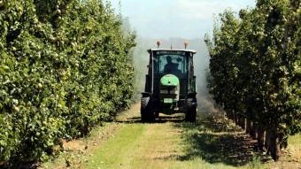 Un pagès de les Borges Blanques sulfatant amb el tractor una finca de peres