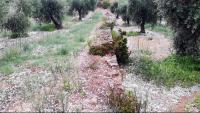 Imatge d'una finca d'olivera de Bovera, a les Garrigues, amb la pedra caiguda a terra