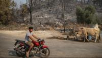 Un home observa l'incendi de Mulas (Turquia)