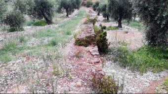 Imatge recent d'una finca d'olivera de Bovera, a les Garrigues, amb la pedra caiguda a terra