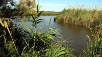 Una imatge de l'estany de La Ricarda