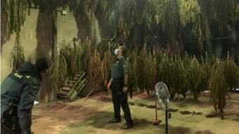 Dos agents de la Guàrdia Civil inspeccionen la sala que servia per a assecar les plantes de marihuana